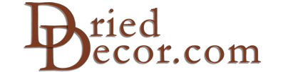 Pinecone Decor Logo